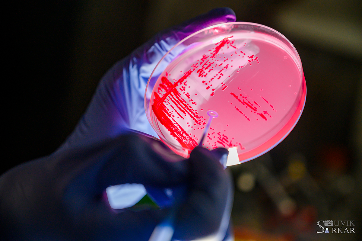 Antibacterial, Gram-positive bacteria killer